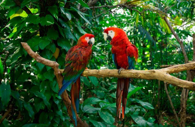 Colombia, anfitrión del Día Mundial del Medio Ambiente