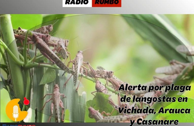 Alerta por plaga de langostas en Vichada, Arauca y Casanare.