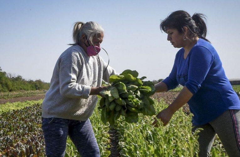 La plataforma digital y el empoderamiento de la mujer rural.